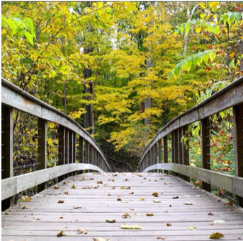 An image of a bridge in Warren Woods Park, Michigan.